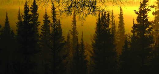 From The Sunset, Forest and Grief – …Empty, Cold And Forgotten…